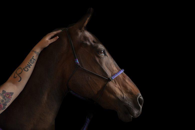 equine photography oregon horse portraits