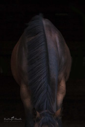 black background equine photography oregon