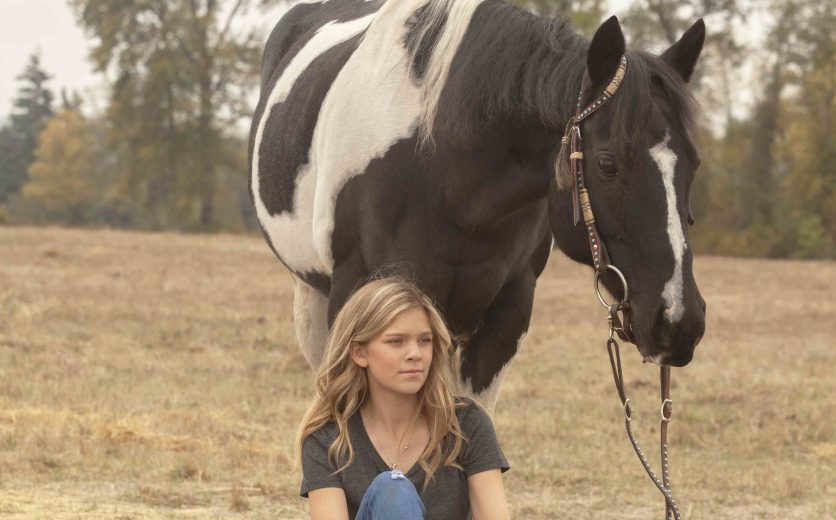 equine horse photography portraits oregon willamette valley