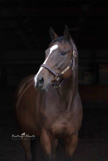 black background equine horse portrait