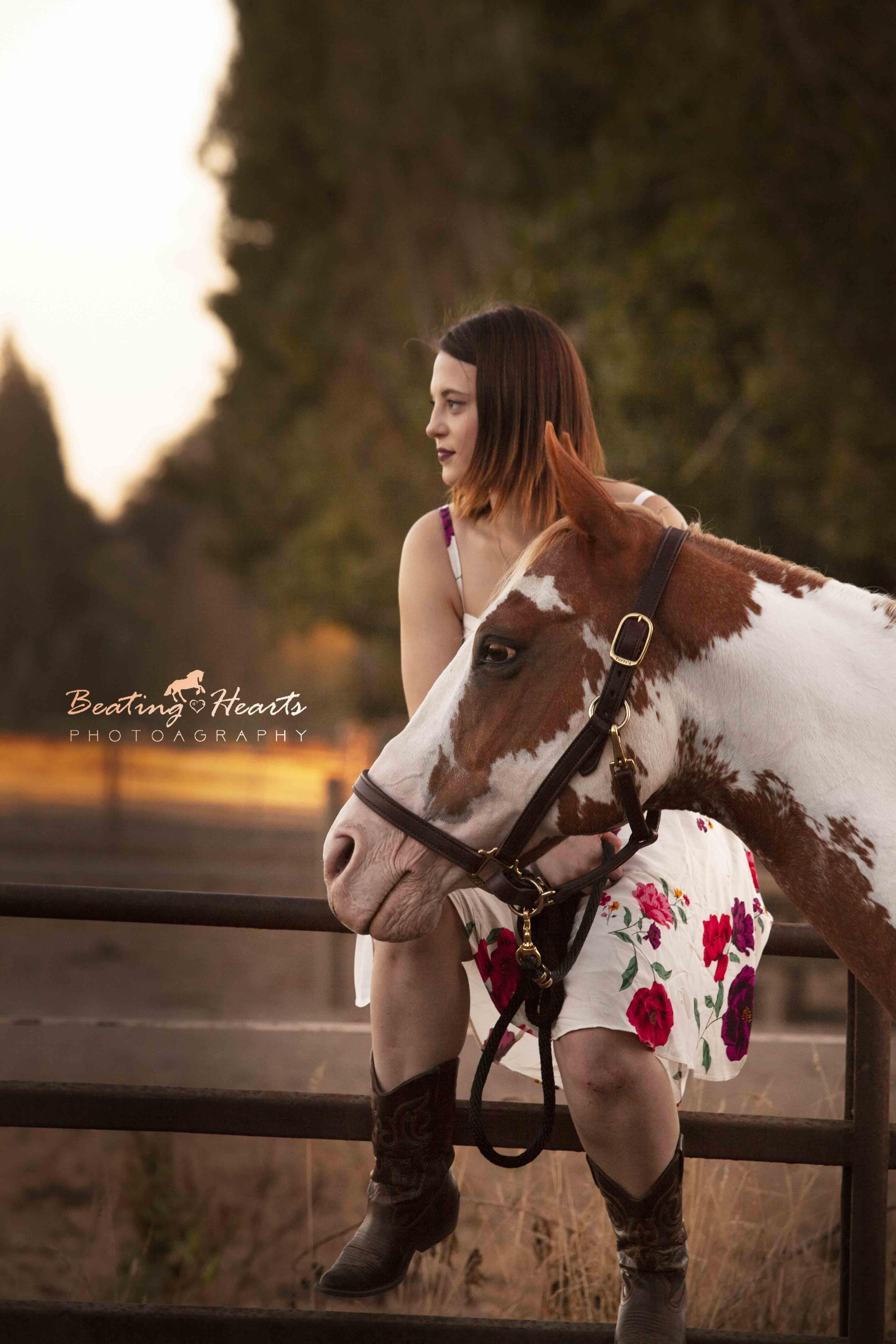equine photography oregon horse portraits sunset fall